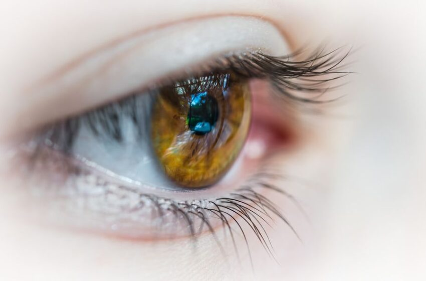 Use of Triphala in Vision Care