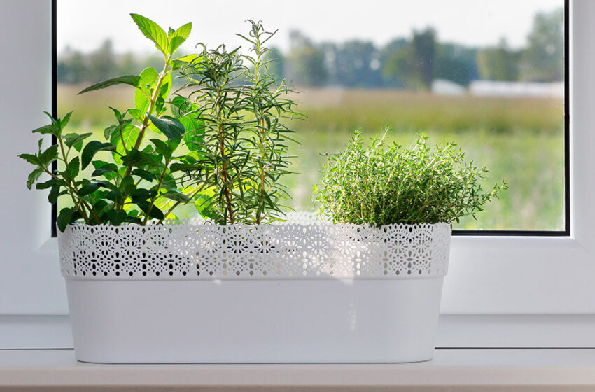 Everything About the Maintenance of an Indoor Herb Garden