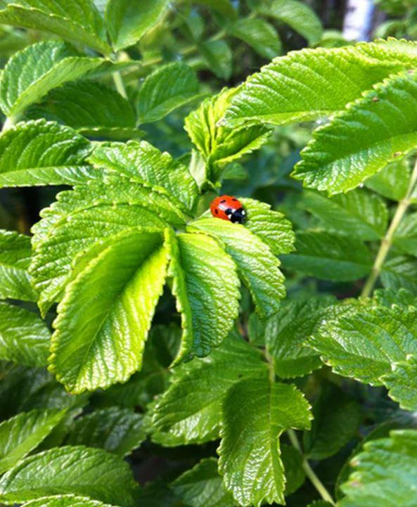 herbs pruning needs