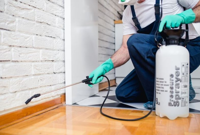 Top Simple Ways To Prepare For Pest Control Service