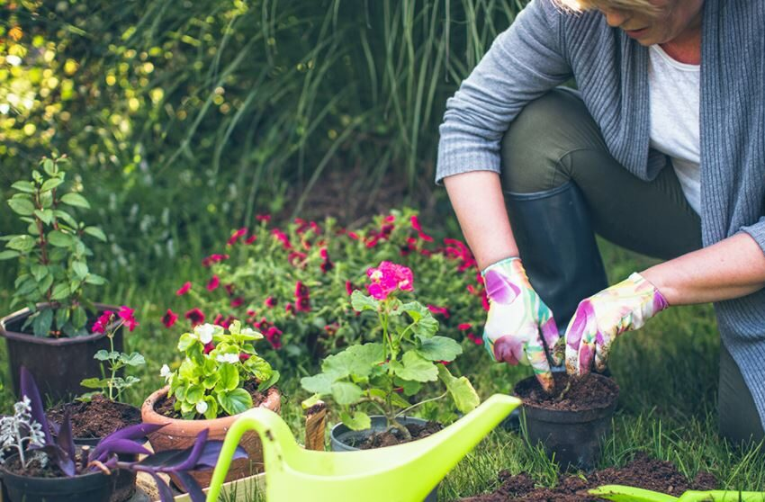 The 5 Most Dependable Plants For Your Garden