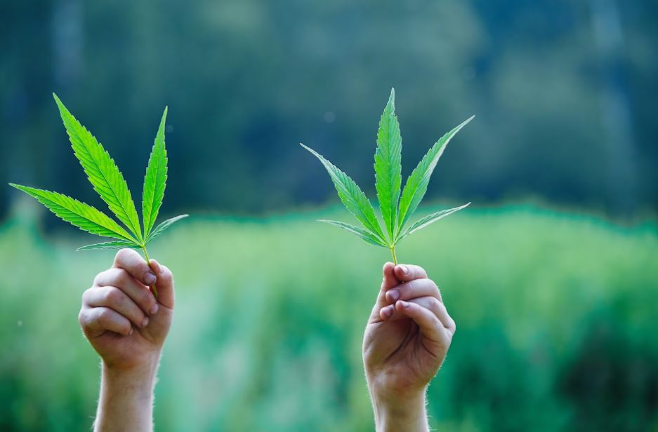 Consider Growing Cannabis Yourself