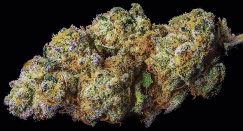 Wedding Pie Strain: Effects and Review